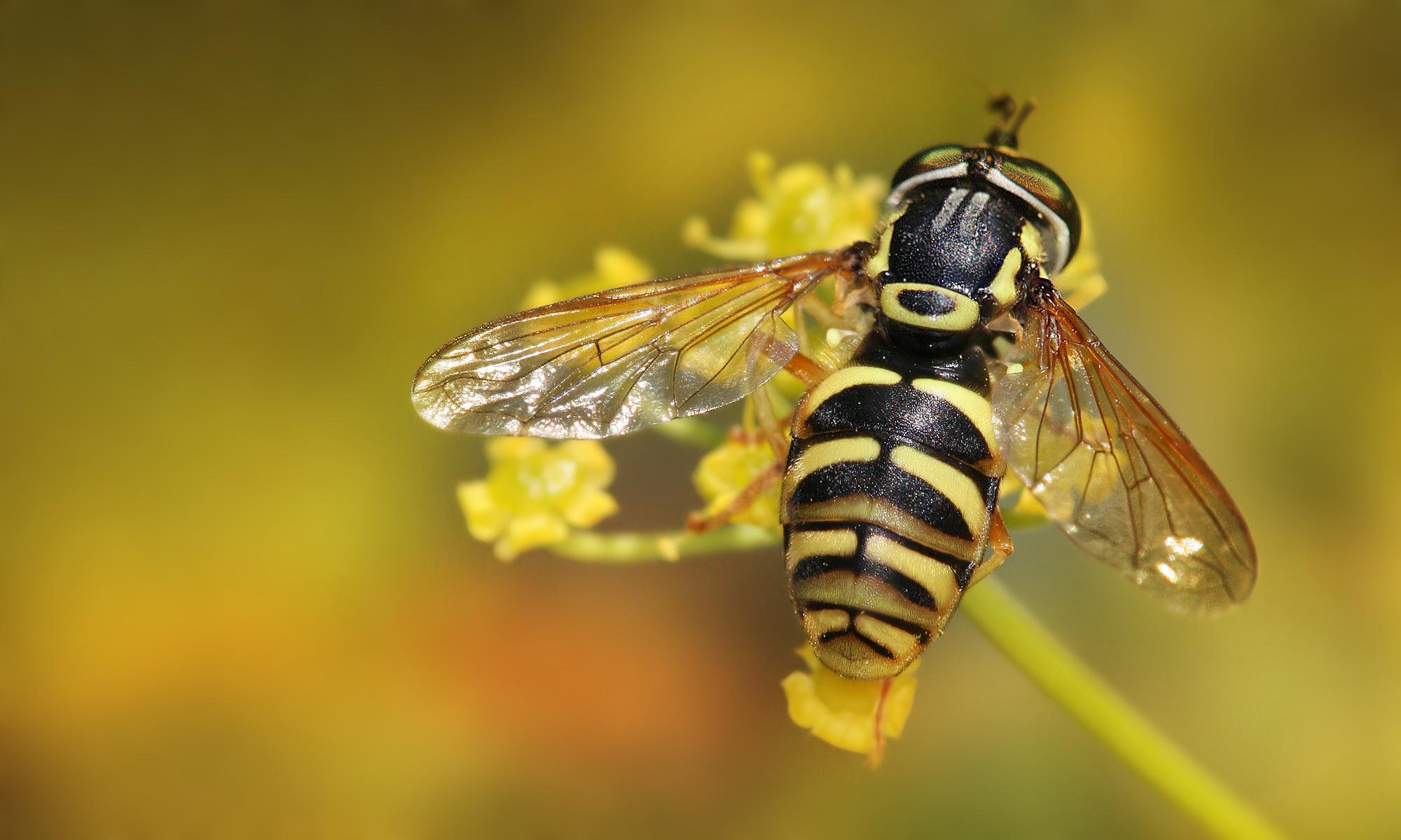 Westminster Bee Club